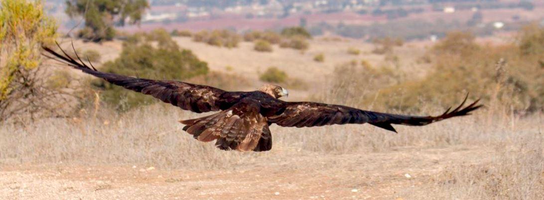 Eagle release 2013
