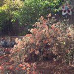 Wildlife garden photo