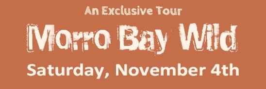 Morro Bay Wild Top Banner