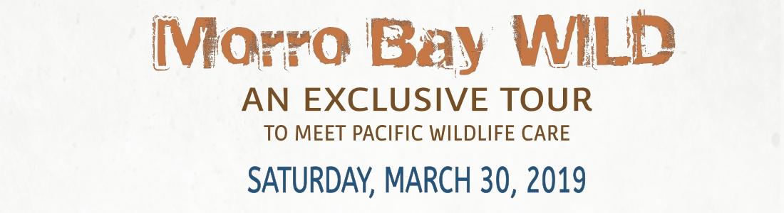 Morro Bay Wild