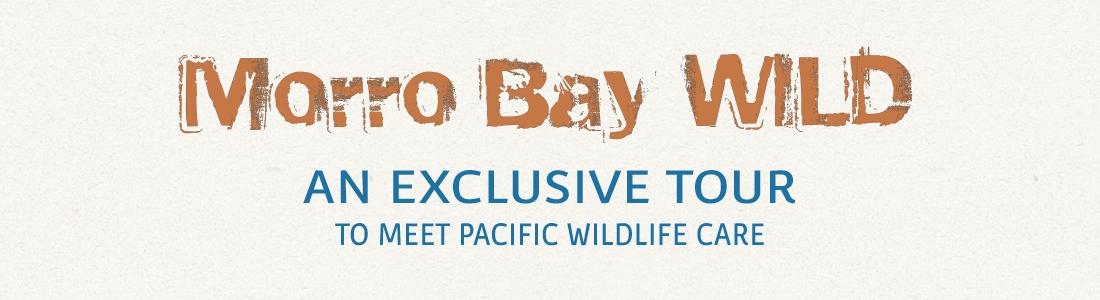 Morro Bay Wild web banner 2019