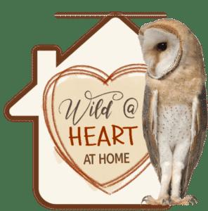 Wild at Heart at Home